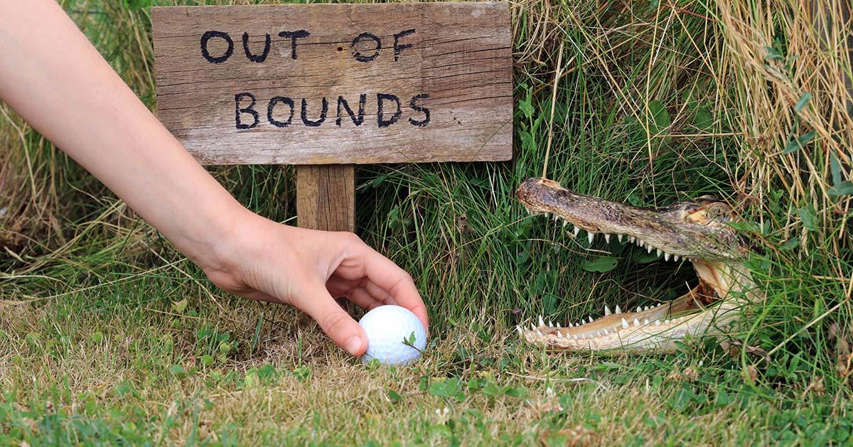 Golfboll nära en alligator