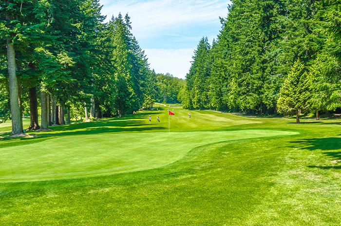 Golfbana med skog