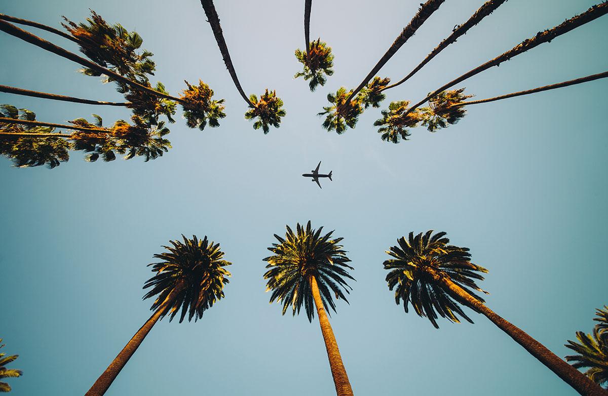 Flygplan och palmer på väg mot på golfresa